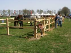 Berendsen Fences successful at driving event Horst